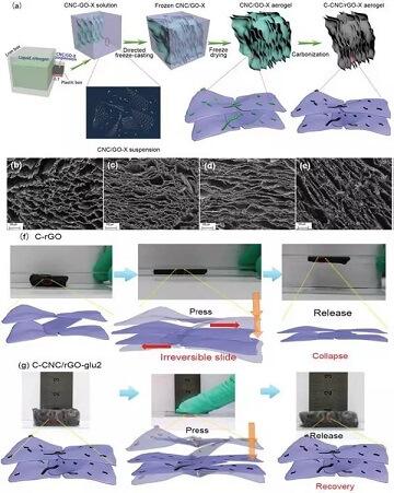 c-cnc/rgo-x 碳气凝胶的制备,结构以及弹性示意图