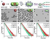 我國研制出氧化石墨烯修飾稀土納米探針 用于腫瘤靶向發光示蹤