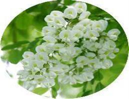槐花提取物槲皮素98%