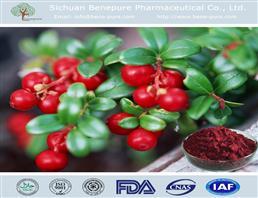 越橘提取物,Bilberry Extract/Bilberry.P.E.