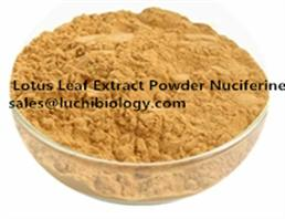 2%, 3%, 4%, 5%, 50%, 98% Lotus Leaf Extract Powder Nuciferine